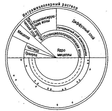 Почвенный конгломерат – Мицелла