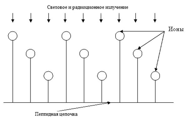Рис. 2. Пептидная цепочка под воздействием солнечного, звездного,  лунного и радиоактивного излучения изотопа К40