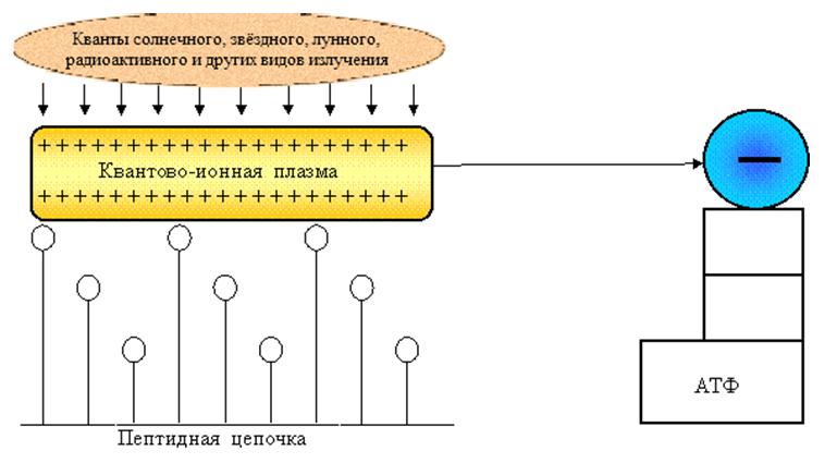 Рис.3. Образование квантово-ионной плазмы и ее перемещение к отрицательному заряду АТФ