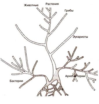 Дерево жизни по Карлу Везе