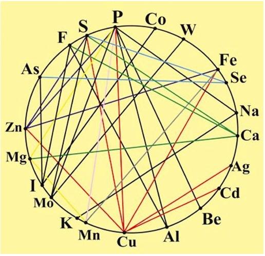 Schemat bilansu mikroelementów w organizmie człowieka